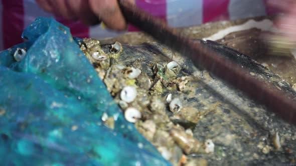 Fresh Clams Fish Market Philippines