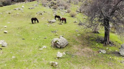 Aerial View of Horses Grazing at the Foot of the Waterfall