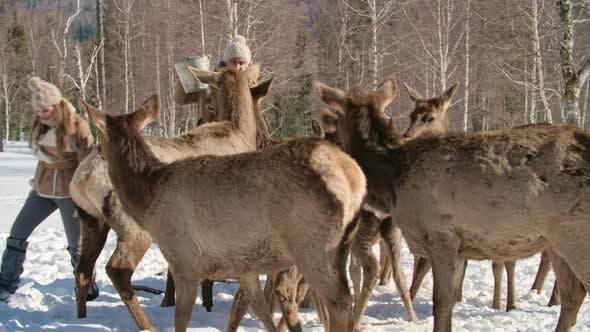 Thumbnail for Deer Farming