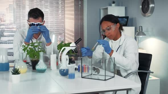 Black Research Scientist Dropping Chemical Liquid on Plant Leaf and Then Giving It To the Hamster