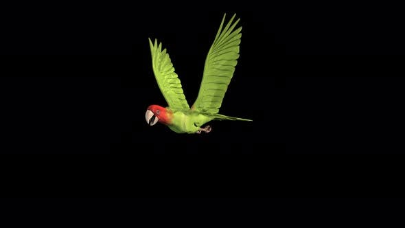 Thumbnail for 4K Green Parrot Front View