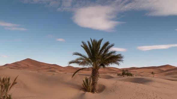 Thumbnail for erg chebbi dune sand sahara desert morocco merzouga