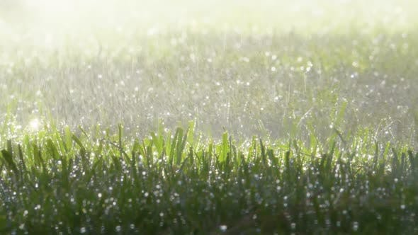 Thumbnail for Spraying Water on Green Grass