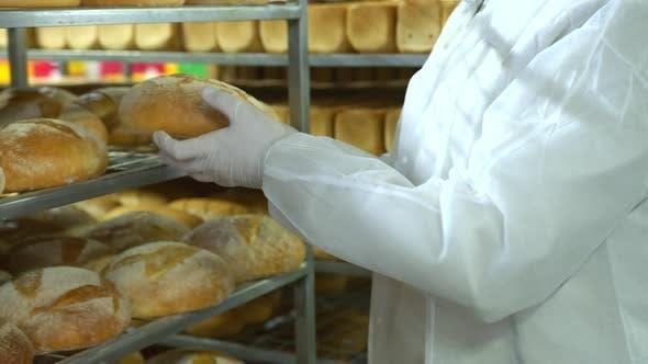 Thumbnail for Ein Bäcker in einer Bäckerei hält frisch gebackenes Brot. Herstellung von Backwaren Nahaufnahme. Frisch gebacken