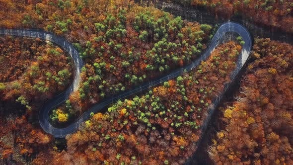Thumbnail for Aerial of Road in Sunny Autumn Forest.