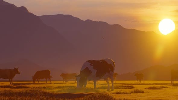 Thumbnail for Herd of Cattle Grazing in Foggy Mountain Area at Sunset