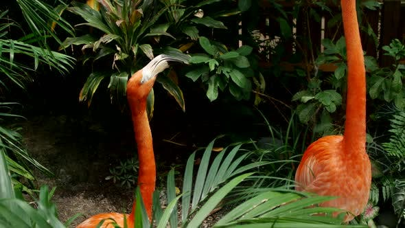 Thumbnail for Pink flamingos in a tropical habitat