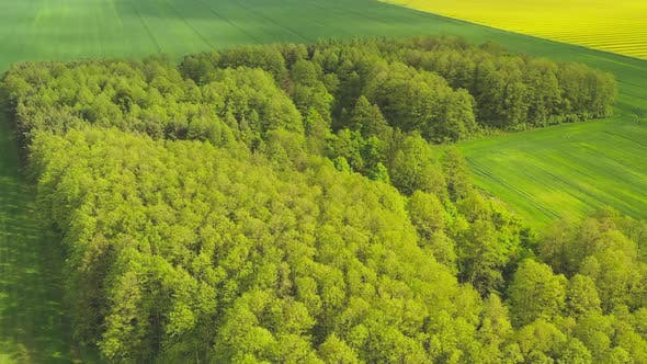 Thumbnail for Flying Over a Small Forest Among the Fields in Belarus