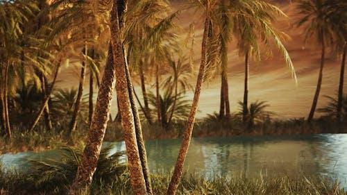 Oase in der heißen Sahara-Wüste