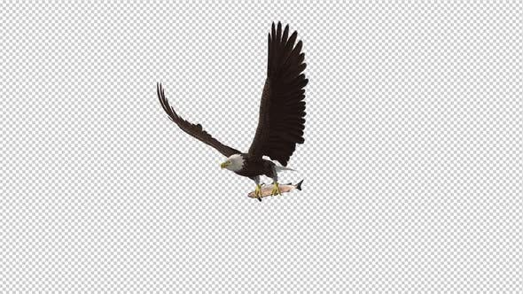 Thumbnail for Bald Eagle with Salmon Fish - 4K Flying Loop - Side Angle II