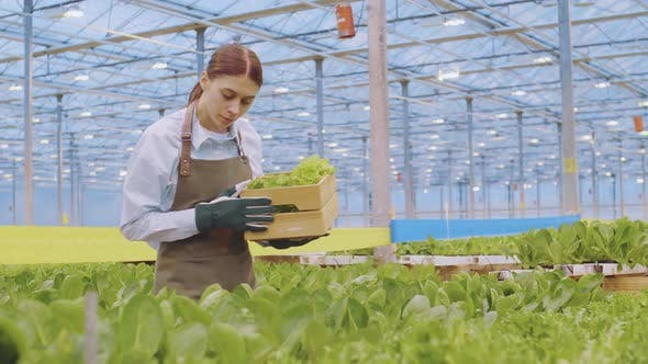 Thumbnail for Woman Checking Plants Health in Plant Nursery