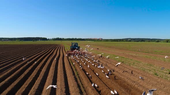 Thumbnail for Agricultural Work on a Tractor Farmer Sows Grain. Hungry Birds are Flying Behind the Tractor