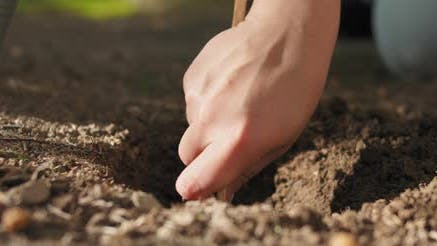 Close up of a woman digging soil with wooden spoon, preparing for planting.