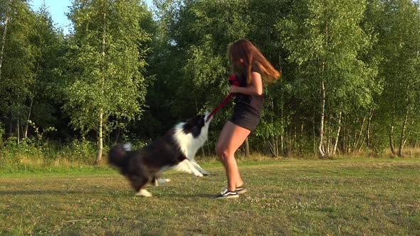 Cover Image for A Woman and a Border Collie Play Tug-of-war with a Toy in a Meadow, the Woman Spins the Dog Around