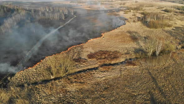 Thumbnail for Large-scale Fires. Burning Grass and Trees in a Large Area.
