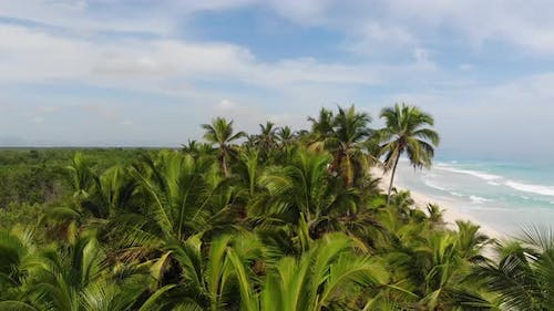 Summer Holiday in Dominican Republic Stunning Beach with Palm Trees