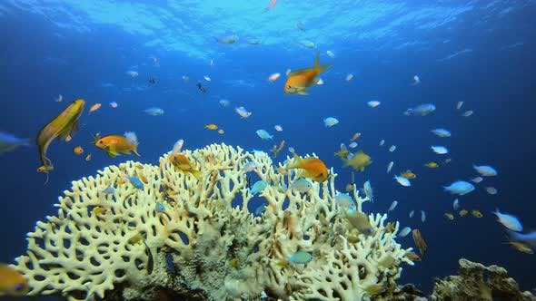 Cover Image for Underwater Fish Tropical Reef Marine.