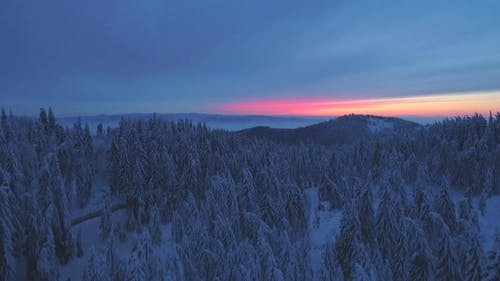 Aerial drone view of sunset snow covered forest trees and sunrise