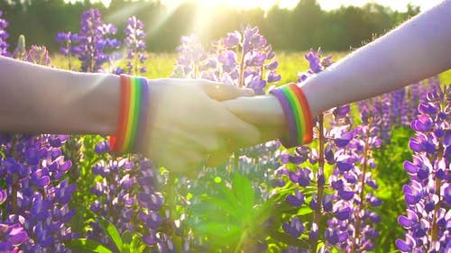 LGBT Concept Two Hands Holding Each Other Are on the Field at Sunset