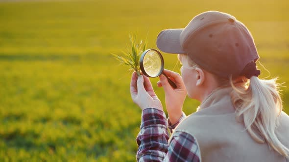 Thumbnail for Back View of Young Woman Agronomist Studying Sprouts on the Field