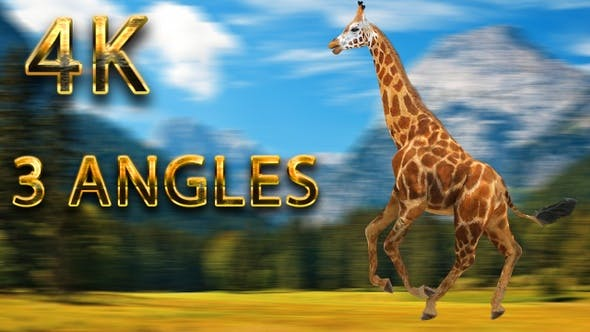 Thumbnail for Giraffe running from 3 different angles