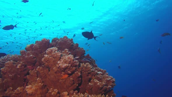 Cover Image for Tropical Coral Reefs