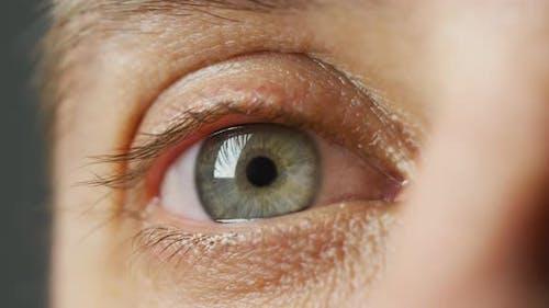 Gray blue eye