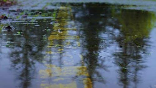 Rain (4K)
