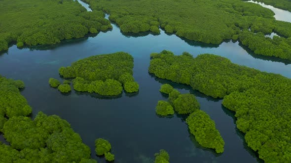 Cover Image for Flooded Amazonian Rainforest in Negro River, Amazonas, Brazil