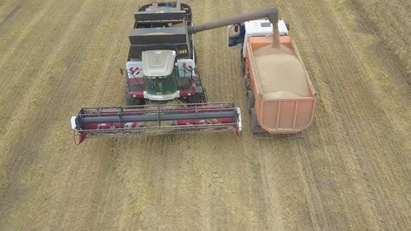 Thumbnail for Farmer Harvesting Silage Combain in Field