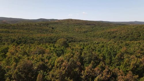 Drone Flying Above Forest
