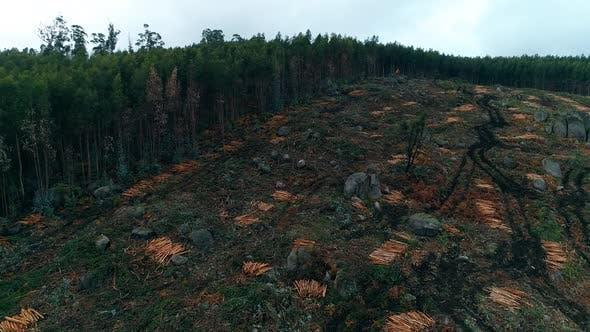 Cover Image for Deforestation