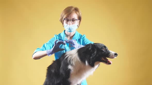 Thumbnail for Professional Female Vet Is Giving an Injection