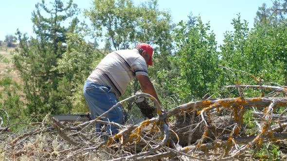 Man Cutting Wood with Saw