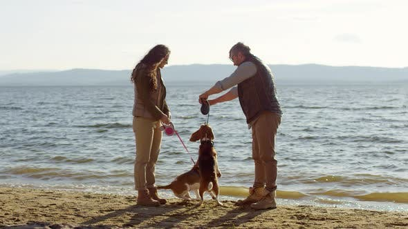 Thumbnail for Couple Giving Treats to Beagle Dogs on Lakeshore