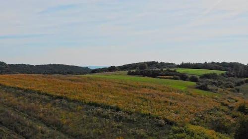 Autumnal wild meadow.