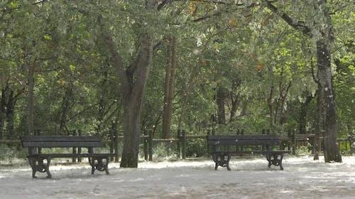 Poplar fluff in a park