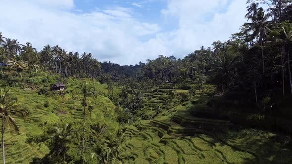 Thumbnail for Aerial Rice Terraces On Bali