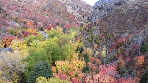 Flying through canyon viewing colorful Fall foliage