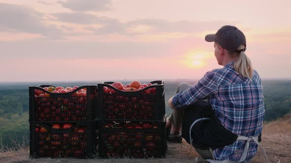 Thumbnail for Woman Farmer Sitting Near Boxes with Tomatoes, Admiring the Beautiful Landscape, Resting After Work