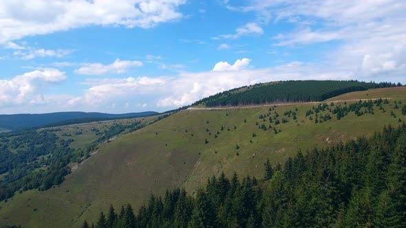 European Mountain Pine Forest Nature