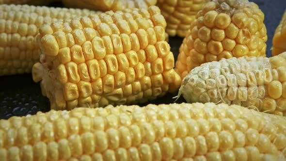 Fresh Raw Organic Corn Cobs on Black Background Rotating Close Up.