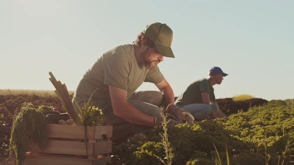Two Gardeners Working Outdoors