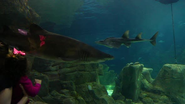 Thumbnail for Kids Aquarium