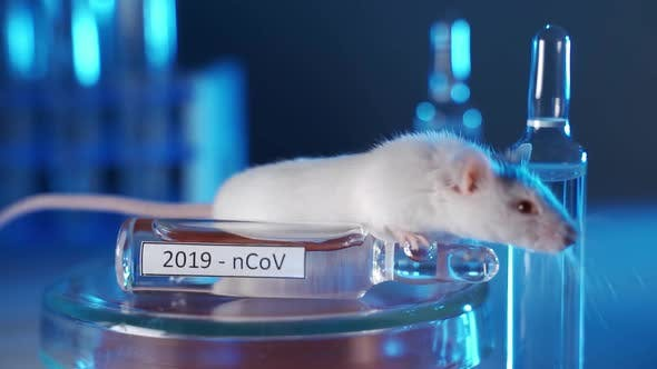 White Laboratory Mouse in a Modern Laboratory