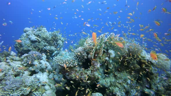 Cover Image for Coral and Colorful Fishes