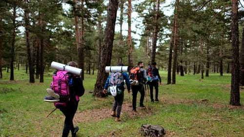Aktive Wanderer Wandern Wandern im Wald