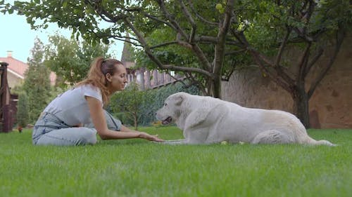 Beautiful Woman with Pet Dog. Girl on Halt with Dog. Mistress Plays with Hunting Hound. Happy Woman