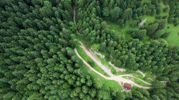 Drone Flying Above Green Forest in the Mountains