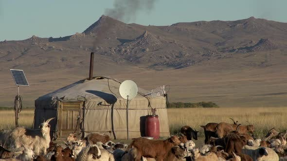 Thumbnail for Close up from sheep and goats in front of a Yurt (Ger)